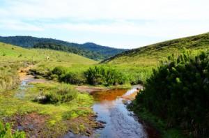Typische Landschaft der Hortons Plain