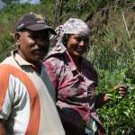 Sri Lankisches Ehepaar auf den Teefeldern von Ella