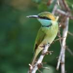 Bundala Nationalpark
