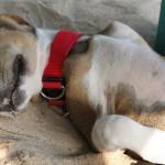 Wilde Hunde gibt es an den Ständen von Sri Lanka reichlich