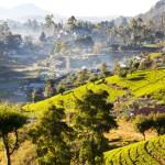 Traumhafte Landschaft im Gebiet um Nuwara Eliya