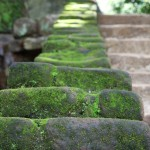 Die ersten Stufen hinauf nach Sigiriya