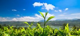 Blick von einer Teeplantage in Sri Lanka bei herrlichstem Wetter